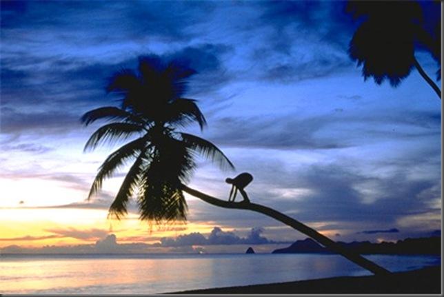 SunsetSaline